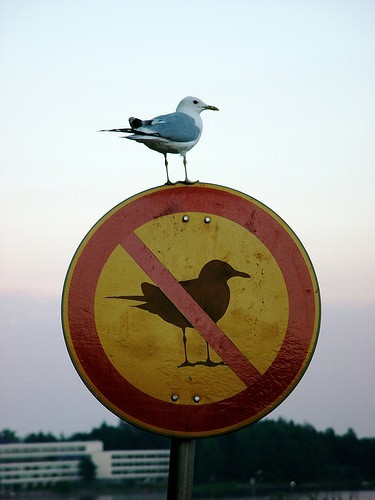 [Image: irony-bird1.jpg]