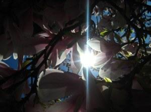 Sunlight through the Flowers